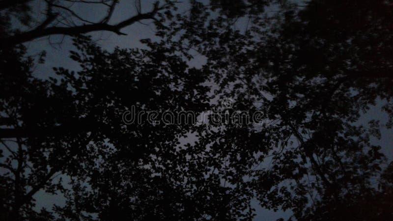 Piękny nocne niebo z zadziwiającą naturą obrazy royalty free