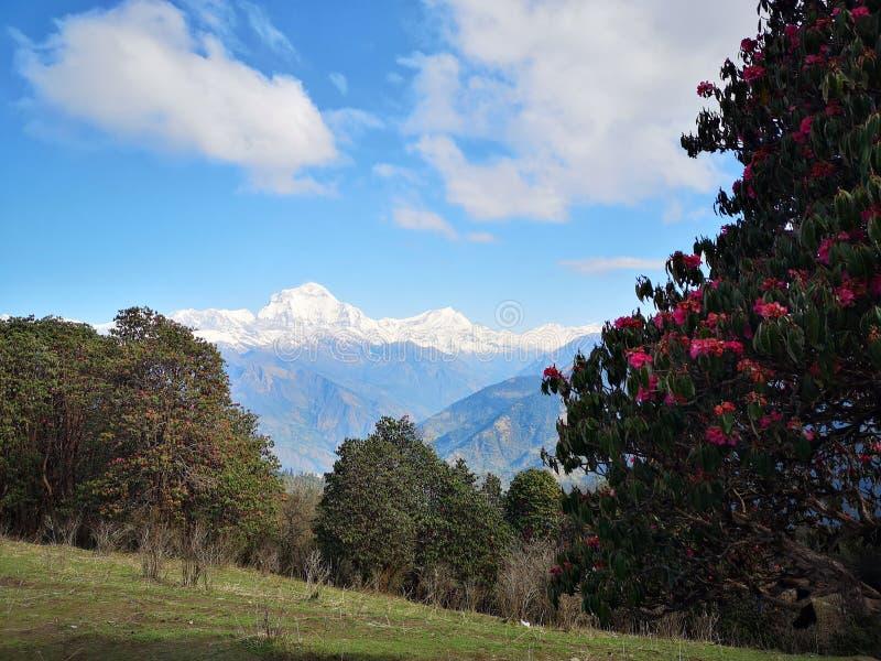 Piękny obraz przyrody w Nepalu zdjęcia royalty free