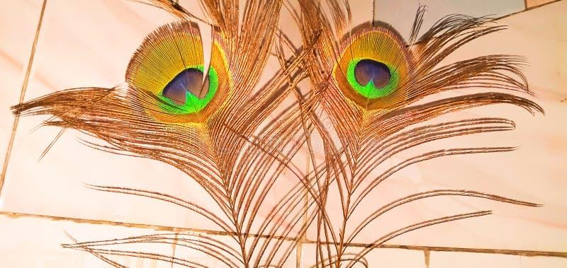 Piękny obrazek pawi piórka zdjęcie stock