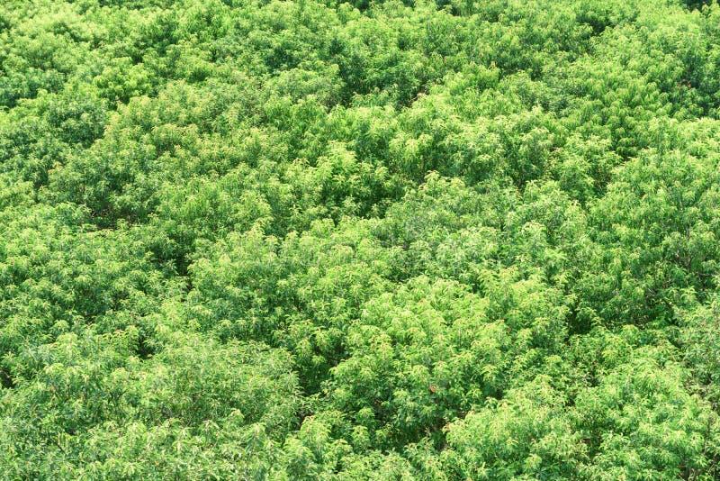 Piękny odgórny widok namorzynowy lasowej zieleni ulistnienie drzewa fotografia stock