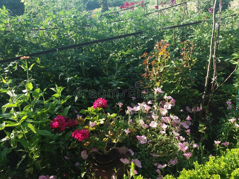 piękny ogród zdjęcia stock