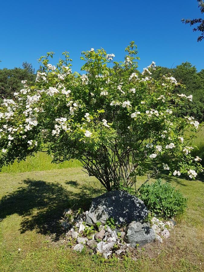Piękny ogród przy Gotland w lecie zdjęcia royalty free