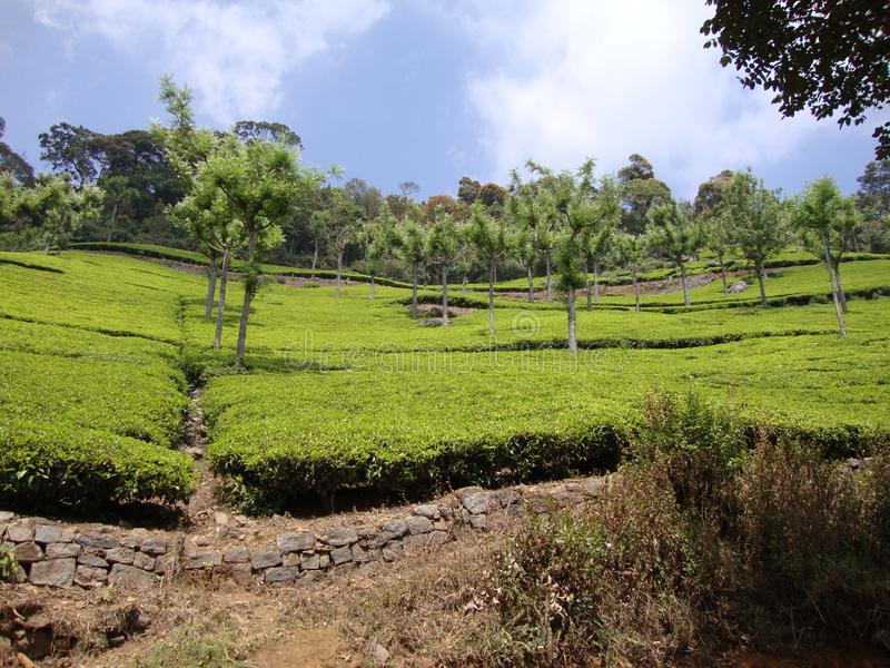 Piękny ogród z drzewami i cropped roślinami zdjęcie stock