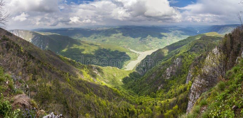 Piękny panoramiczny widok Tara góra i Drina rzeka przy Bila fotografia stock
