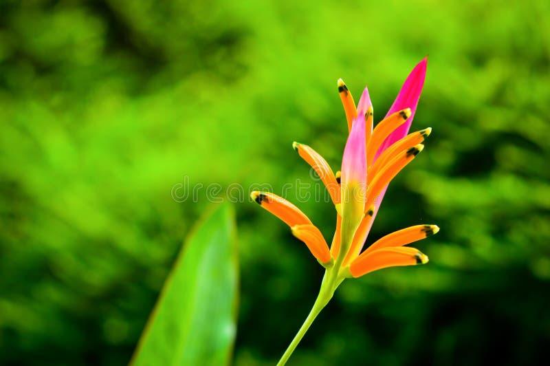 Piękny Parakeet kwiat fotografia stock