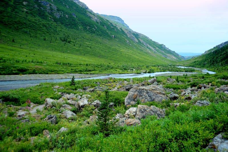 Piękny Park Denali na Alasce niedaleko Fairbanks fotografia stock