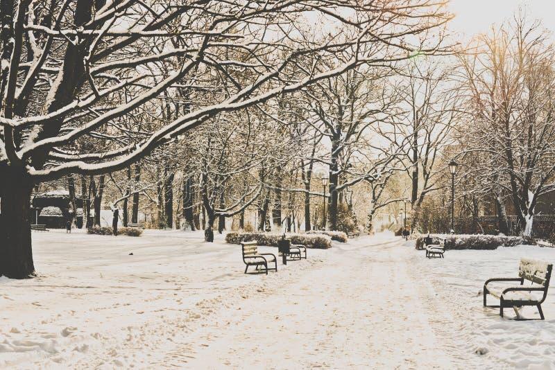Piękny park w zimie zdjęcie royalty free
