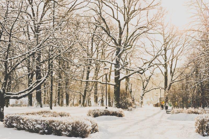 Piękny park w zimie zdjęcie stock