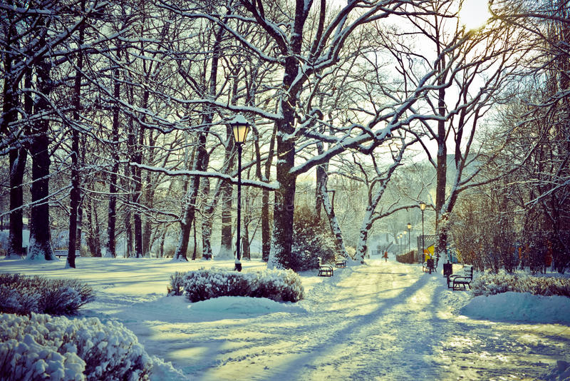 Piękny park w zimie zdjęcia royalty free