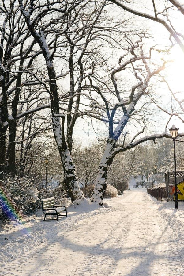 Piękny park w zimie zdjęcia stock