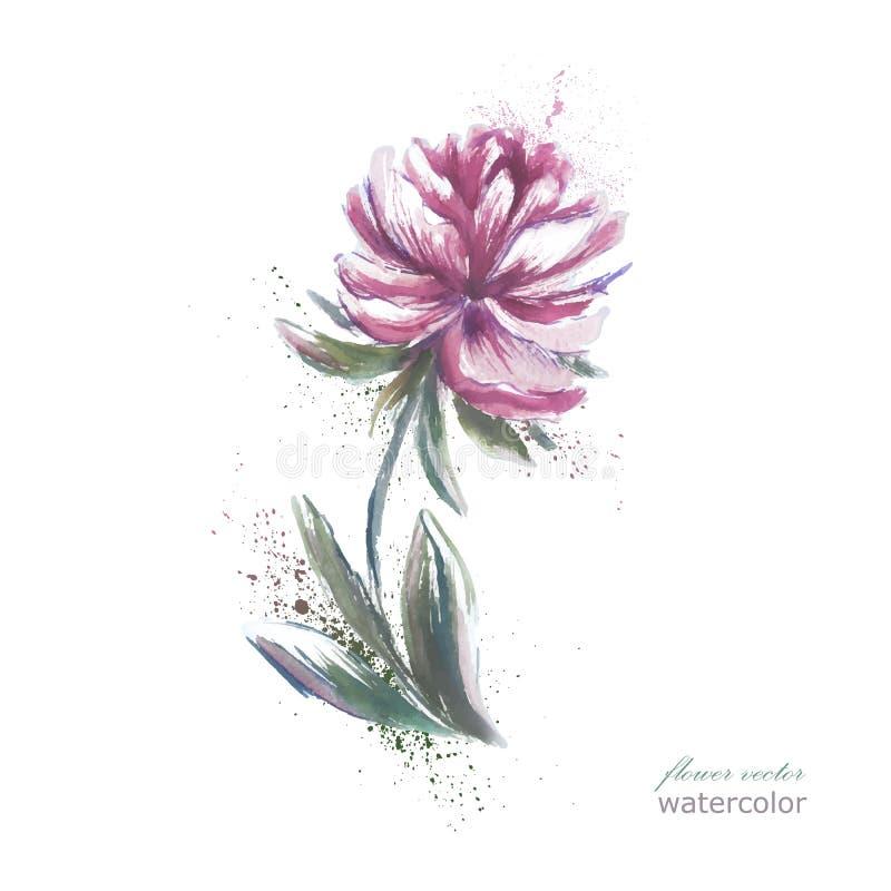 Piękny peonia kwiat, akwarela obraz royalty ilustracja