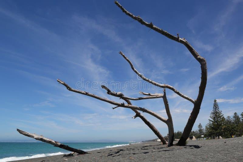 Piękny plażowy sceneria strzał na Morskiej paradzie w Napier mieście w Hawkes zatoce obrazy stock