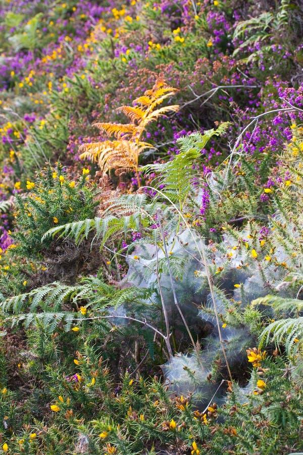 Piękny pogodny natury tło z pająk siecią na kwiaty zdjęcie royalty free
