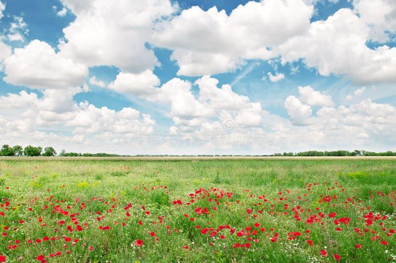 Piękny pole i błękitny chmurny niebo zdjęcia stock