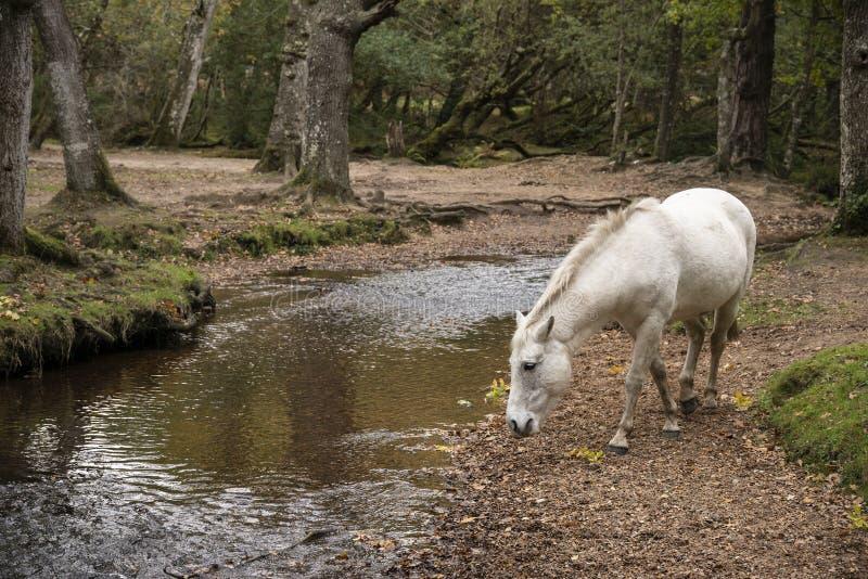 Piękny portret Nowy Lasowy konik w jesień lasu landsca zdjęcia royalty free