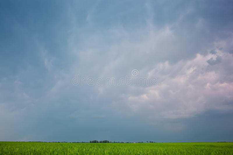 Piękny przeciw, ampuły zieleni pola zimy cerea błękitnemu, chmurnemu niebu, obraz stock