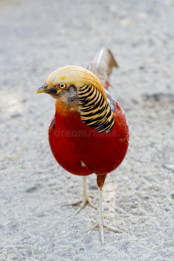 piękny ptak fotografia stock