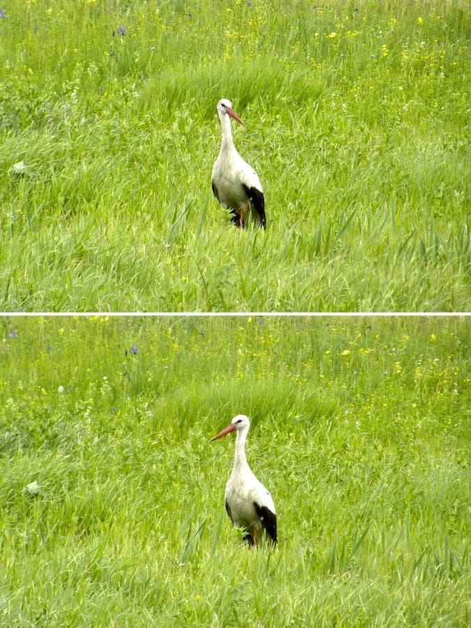 Piękny ptasi bocian zdjęcie royalty free