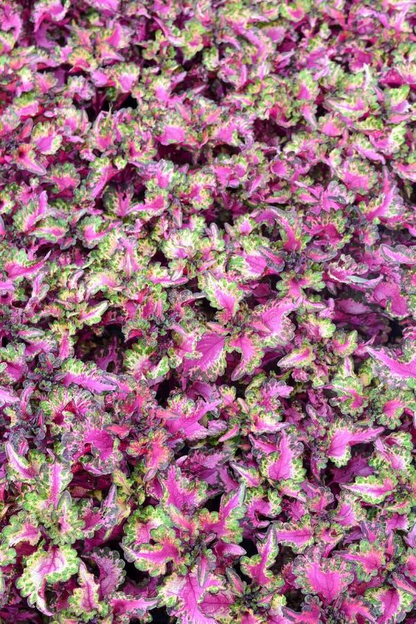 Piękny różowy liść fotografia stock