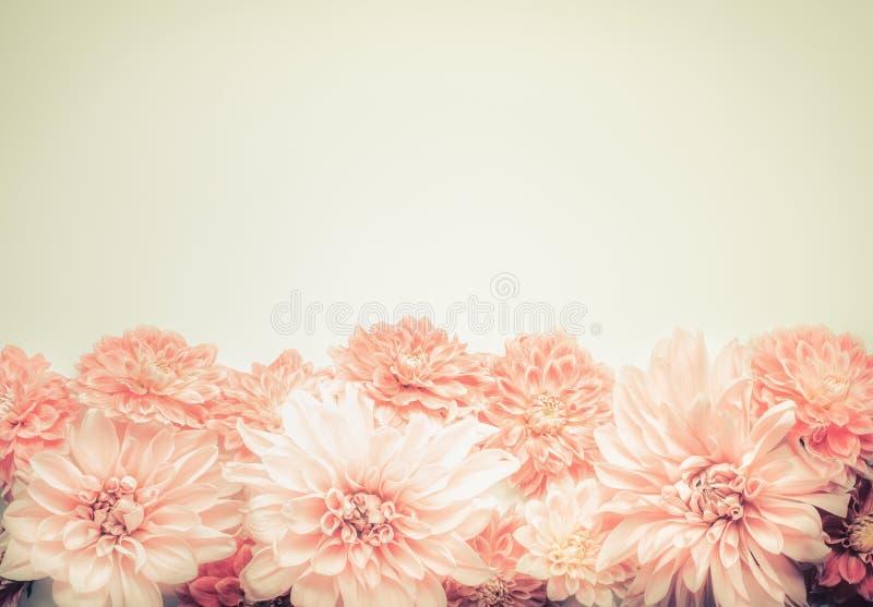 Piękny różowy pastel kwitnie na beżowym tle, wierzchołek, granica Uroczy kartka z pozdrowieniami lub zaproszenie dla poślubiać, m zdjęcie stock