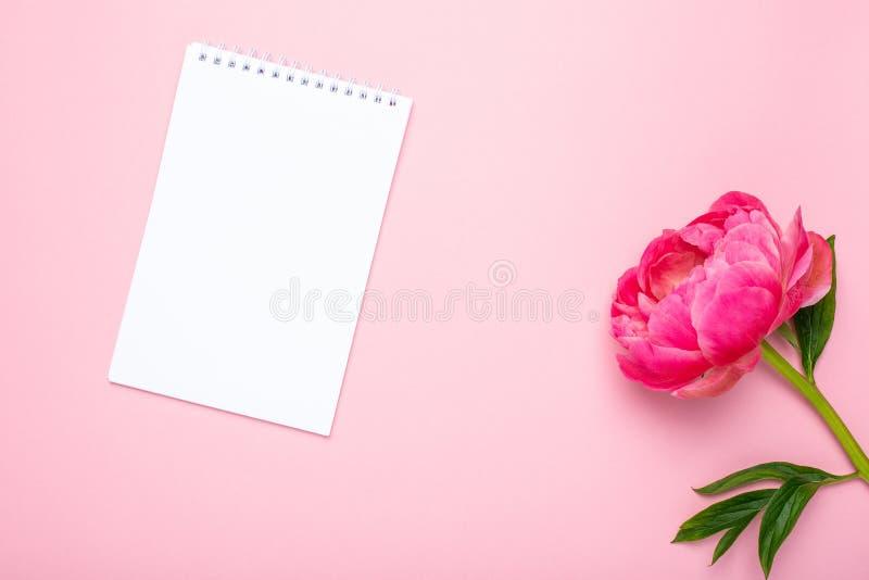 Piękny różowy peonia kwiat, notatnik z kopii przestrzenią dla twój teksta na pastelowych menchii tle i fotografia royalty free