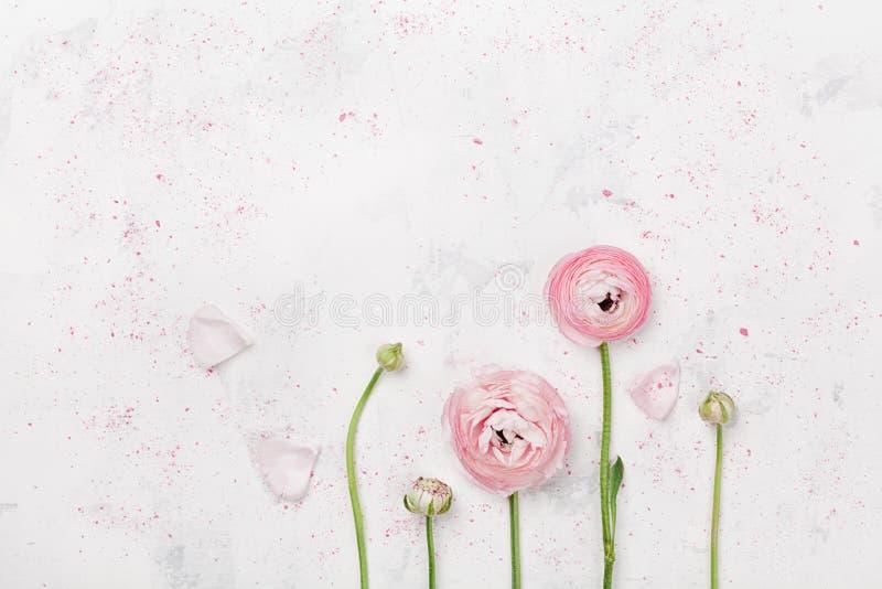 Piękny różowy ranunculus kwitnie na białym stołowym odgórnym widoku Kwiecista granica w pastelowym kolorze Ślubny mockup w mieszk zdjęcia royalty free