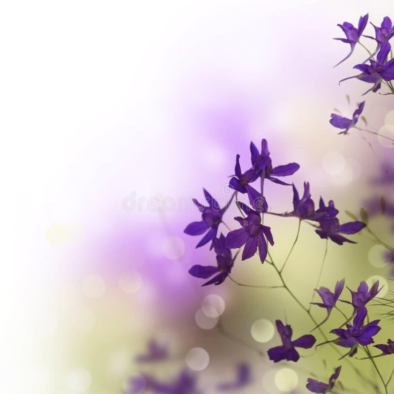 piękny rabatowy kwiecisty fotografia royalty free