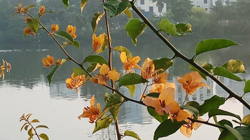 Piękny ranek fotografia stock