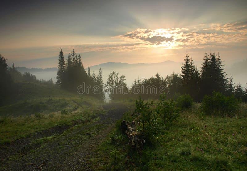Piękny ranek w Carpathians, Ukraina. zdjęcie royalty free