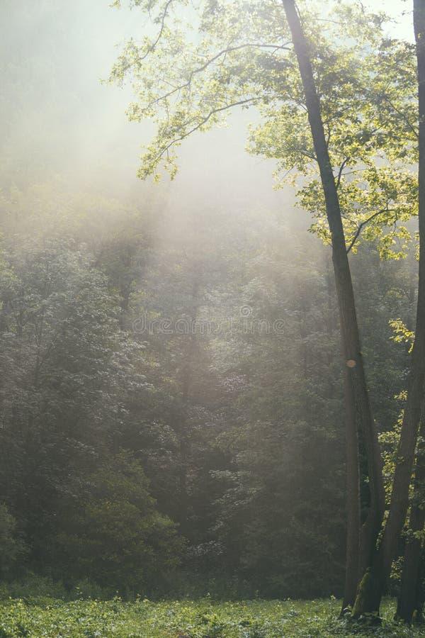 Piękny ranku las fotografia stock