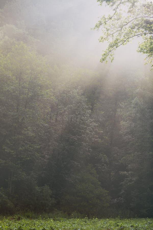 Piękny ranku las zdjęcia stock