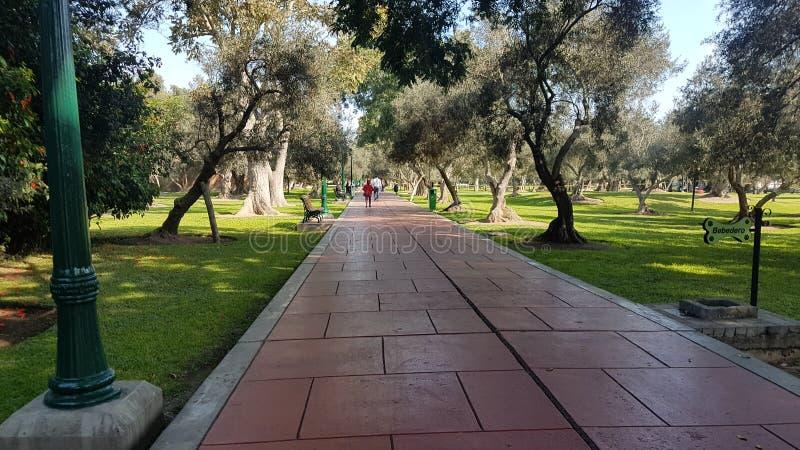 Piękny ranku Olivar park fotografia stock