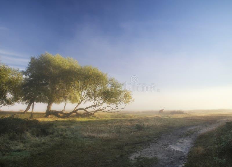 Piękny rozprzestrzeniający światło na krajobrazie z czerwonego rogacza jeleniem na Aut fotografia stock