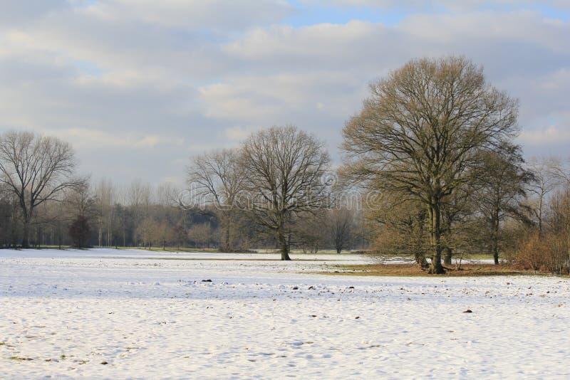 Piękny rozszerzony krajobraz z dużymi drzewami z śnieżną koc w zimie zdjęcie stock