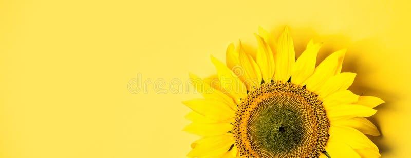 Piękny słonecznik na żółtym tle Długi sztandaru format zdjęcia royalty free