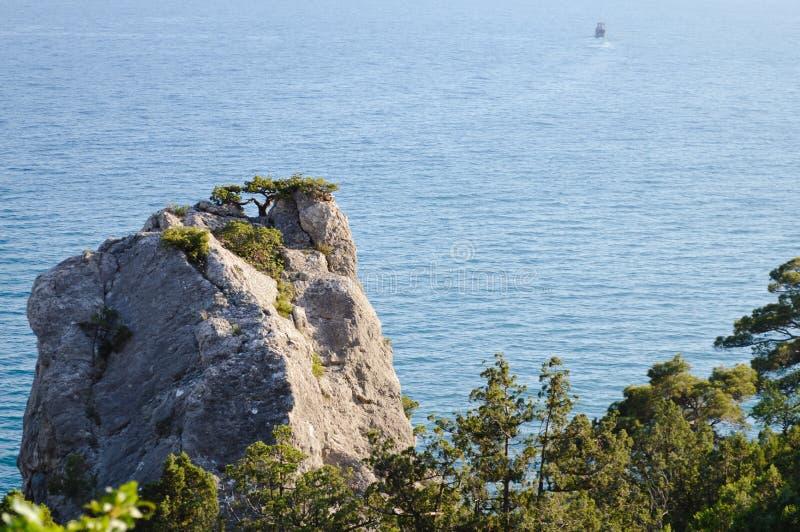 Piękny seascape. Natura skład. Sosna na skale fotografia royalty free