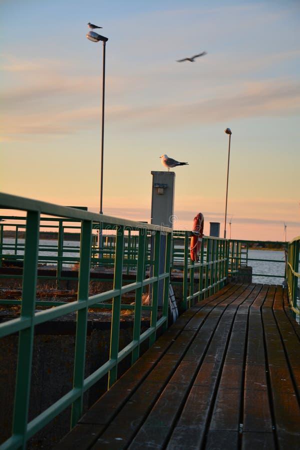 Piękny seascape wschodni Estonia zdjęcie royalty free