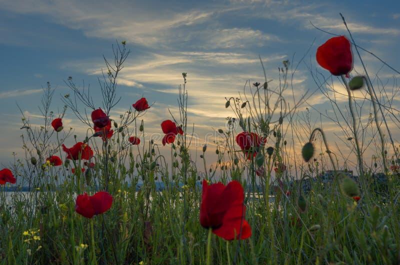 Piękny Seascape Wspaniały wiosna zmierzch w polu maczki Burgas, Bułgaria morze czarne fotografia stock