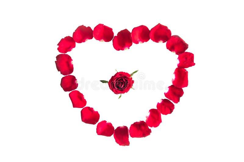 Piękny serce czerwieni róży płatki odizolowywający fotografia royalty free