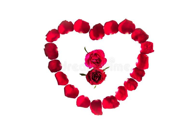 Piękny serce czerwieni róży płatki odizolowywający fotografia stock