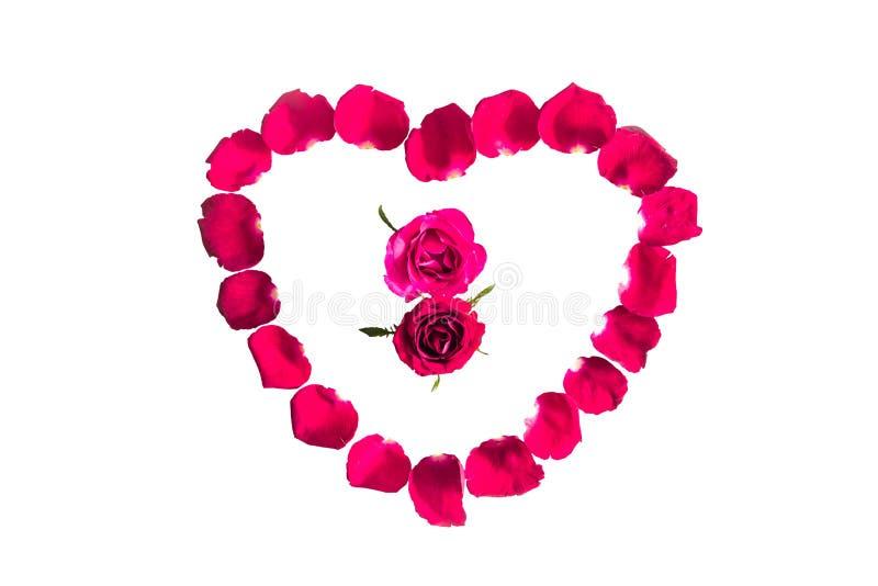 Piękny serce czerwieni róży płatki odizolowywający obraz royalty free