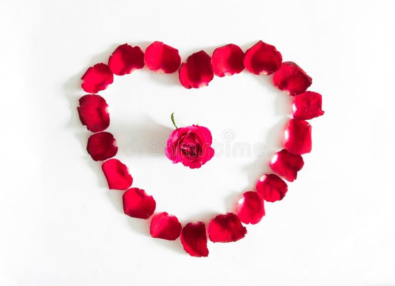 Piękny serce czerwieni róży płatki odizolowywający obrazy royalty free