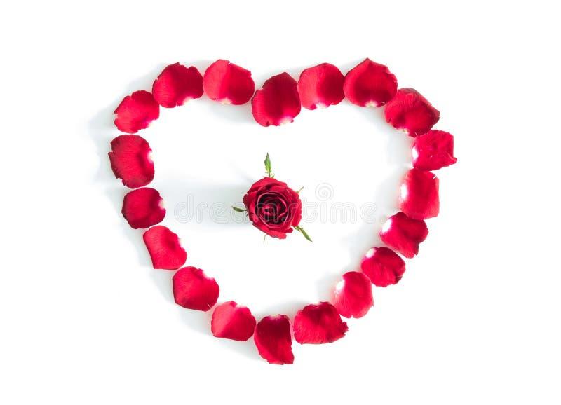 Piękny serce czerwieni róży płatki odizolowywający obrazy stock
