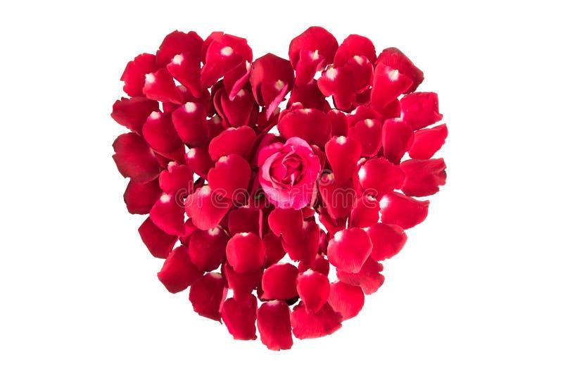 Piękny serce czerwieni róży płatki odizolowywający na bielu obraz stock