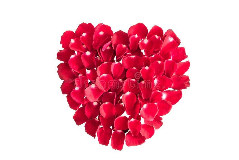 Piękny serce czerwieni róży płatki odizolowywający na bielu zdjęcie royalty free