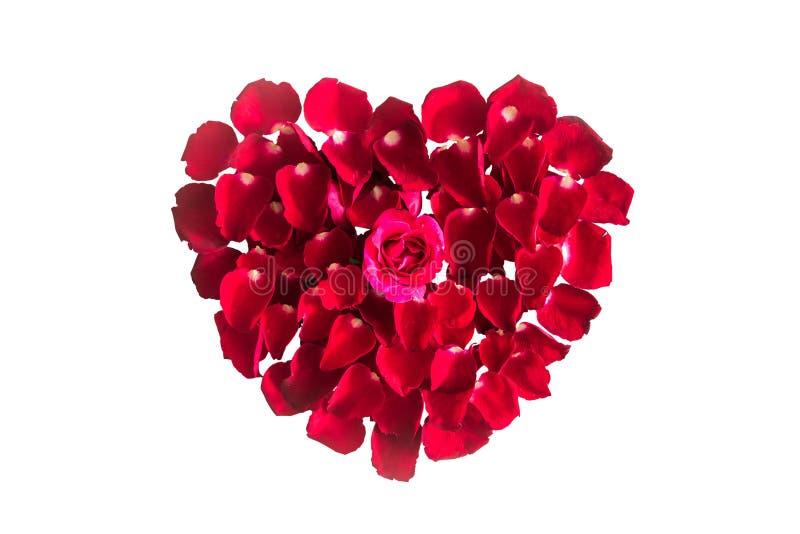 Piękny serce czerwieni róży płatki odizolowywający na bielu fotografia royalty free