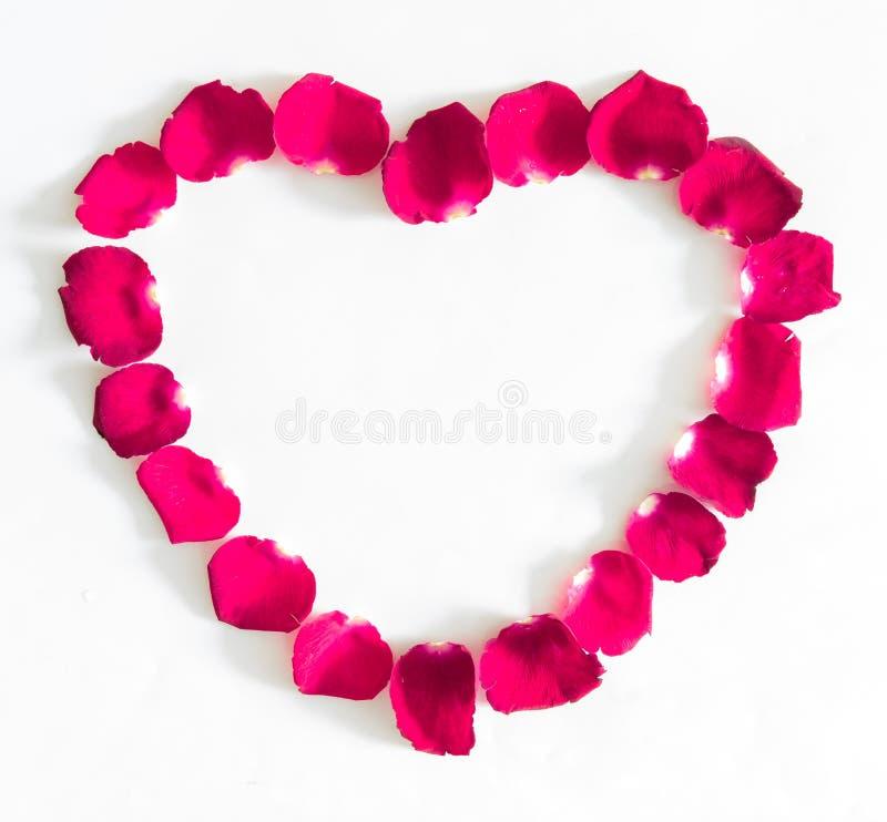Piękny serce menchii róży płatki obrazy stock