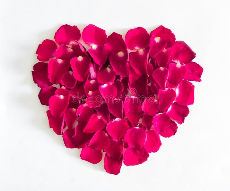 Piękny serce menchii róży płatki fotografia royalty free
