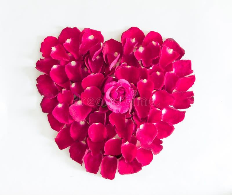 Piękny serce menchii róży płatki zdjęcia royalty free