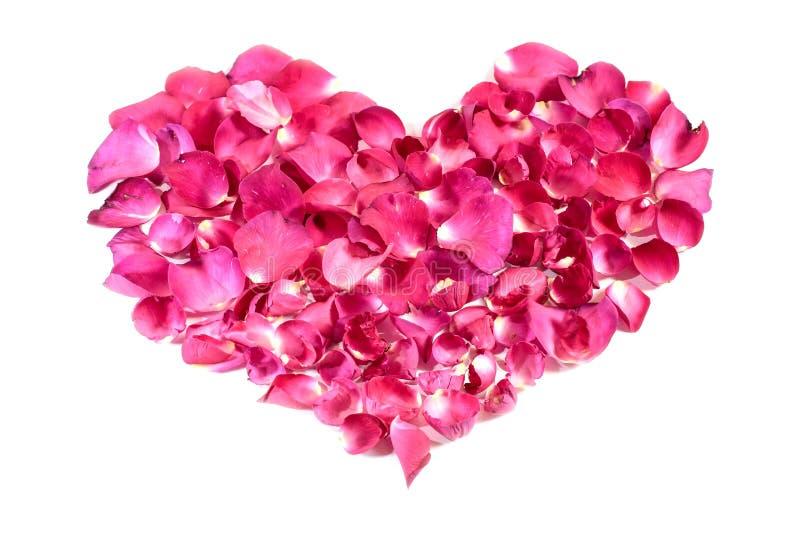 Piękny serce menchii róży płatki obraz stock